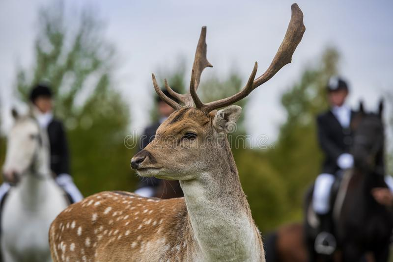 Jaga för hjortar royaltyfri fotografi