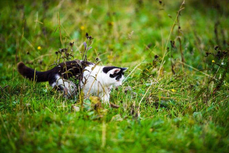 jaga katten som hoppar till och med gräs royaltyfri fotografi