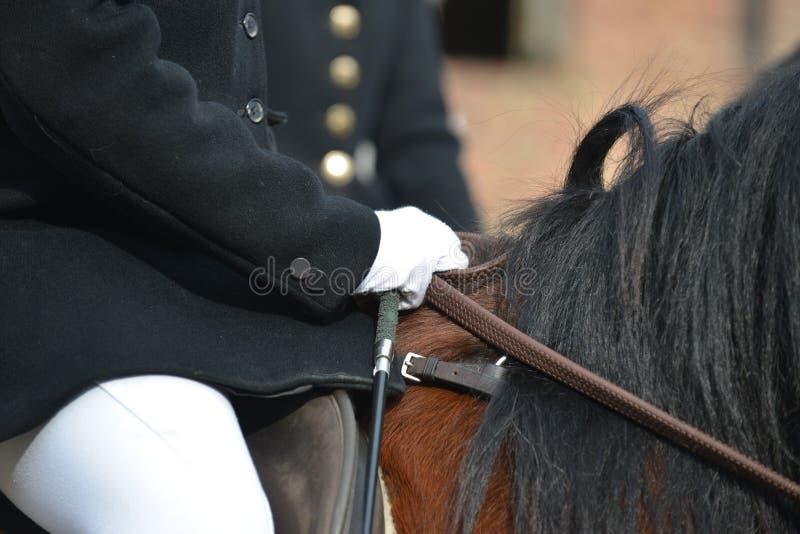 Jaga med hästar, en kvinna på hennes springare som är klar för en day& x27; s-jakt arkivbild