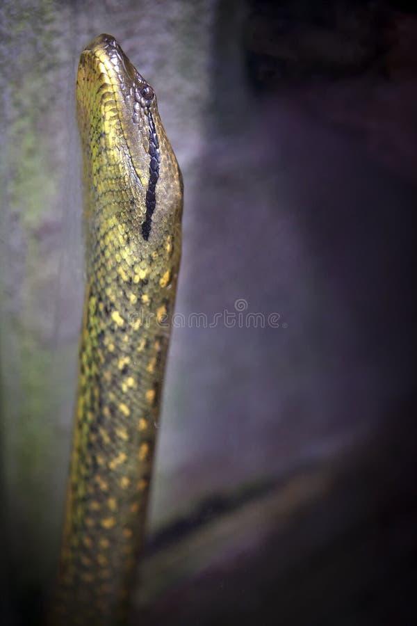 Jaga ormen arkivbild