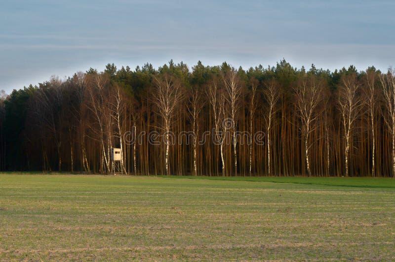 Jaga ställningen vid skogen arkivbilder