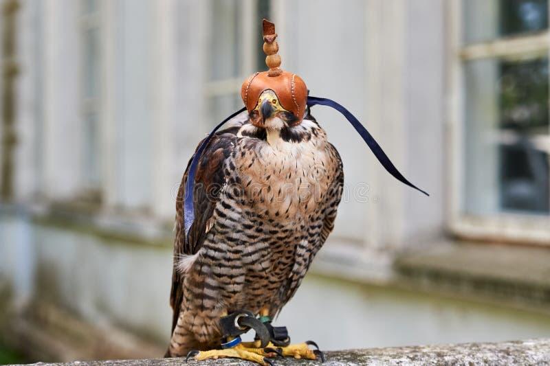 Jagd Mit Falken