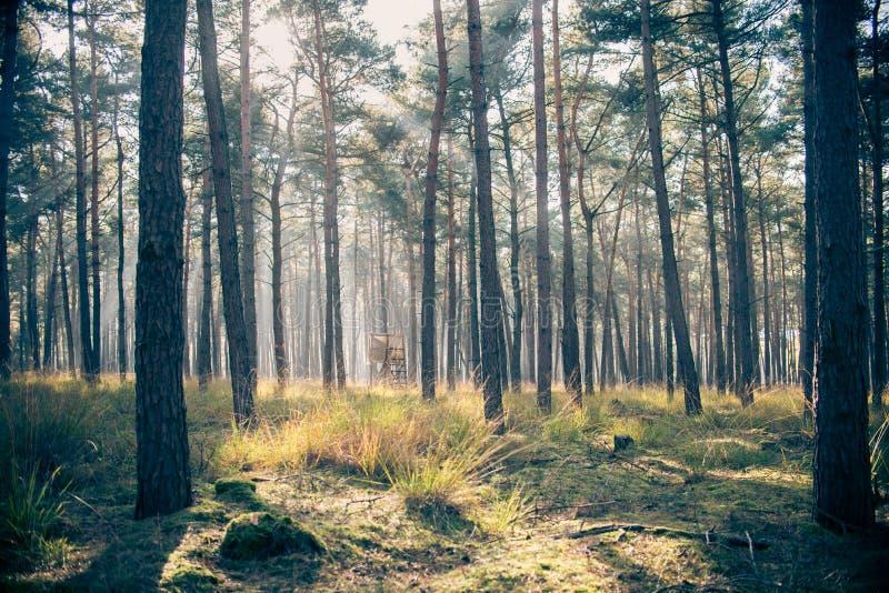 Jagdschutz im Wald stockbild