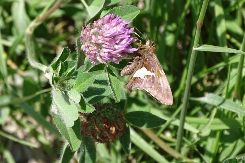 Jagen eines Schmetterlinges lizenzfreie stockfotos