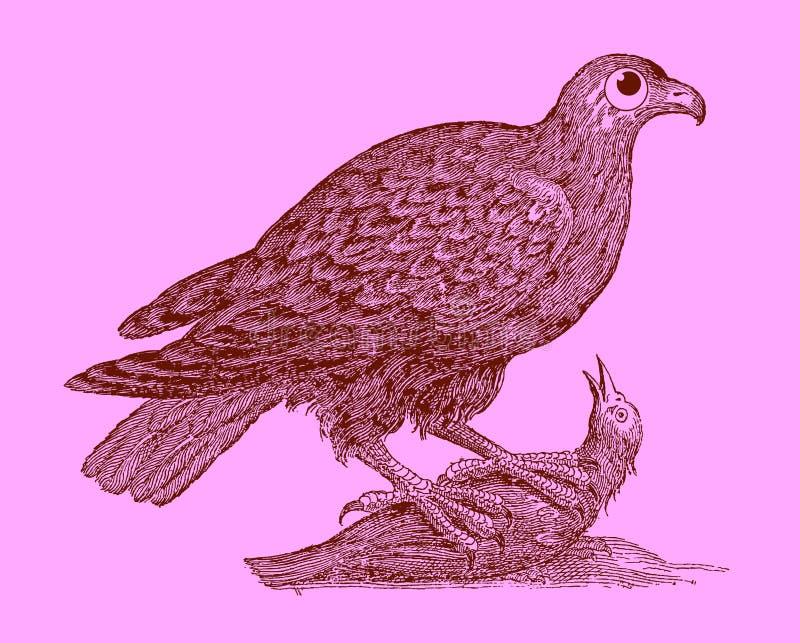Jagend roofvogel: adelaarszitting op een gevangen vogel stock illustratie