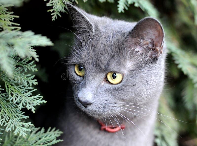 Jagende kat stock afbeelding