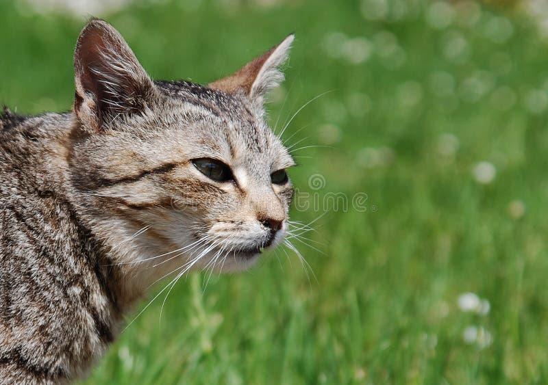 Jagende kat stock afbeeldingen