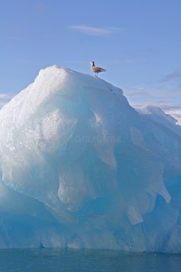 Jager op ijsberg stock foto