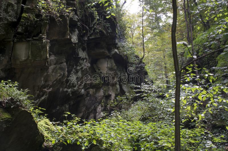 Jagged cliff in deep hollow. A jagged cliff wall lines the side of a rugged hollow in West Virginia with vines and plants growing from the rock face, with dense royalty free stock images