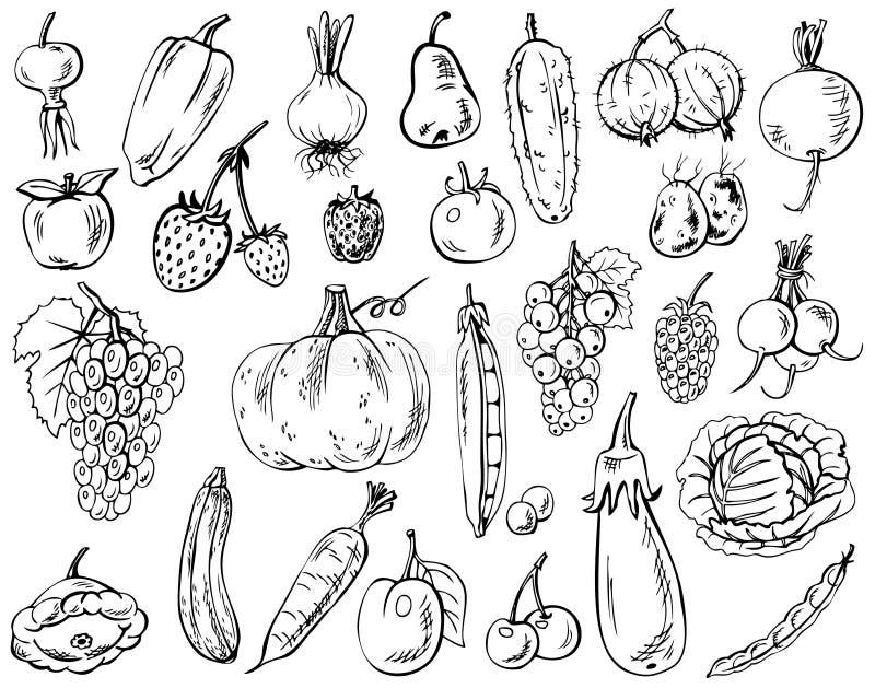 jagod owoc rzeczy inkasowi warzywa ilustracja wektor