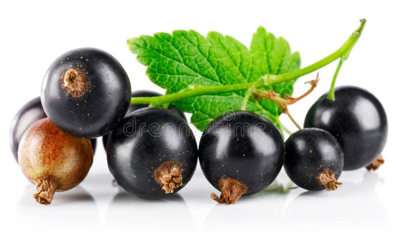 Jagoda czarny rodzynek z zielonym liściem świeżym fotografia royalty free
