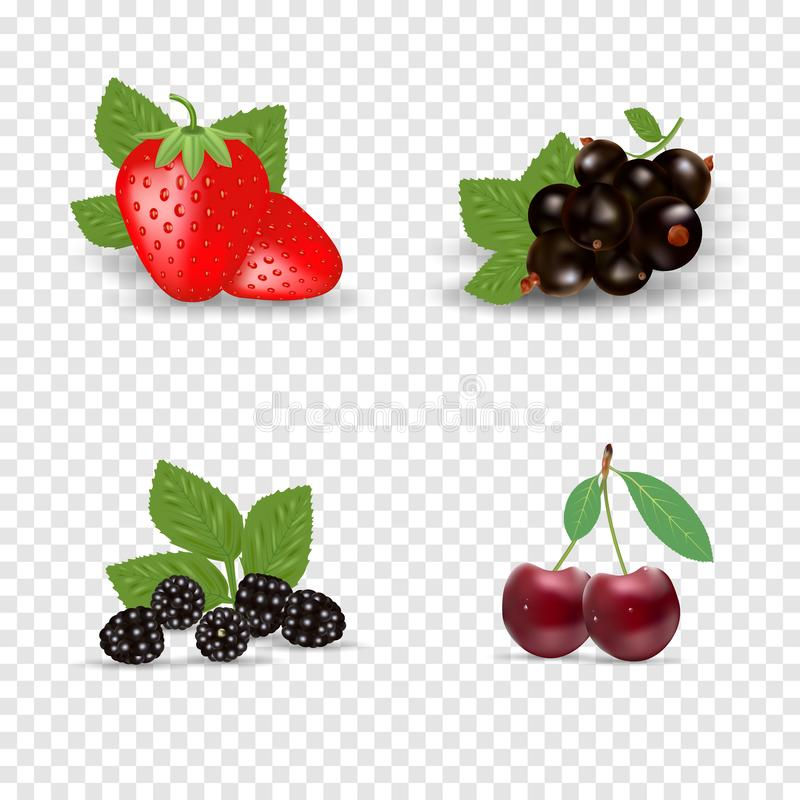 Jagodowy ikona set Czarni rodzynek, backberry, truskawka i wi?nia Jagody z zielonymi li??mi Organicznie zdrowy jedzenie wektor royalty ilustracja