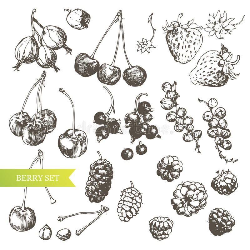jagodowy set royalty ilustracja
