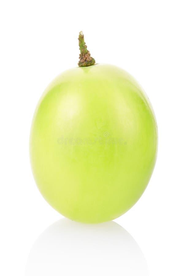 jagodowy winogrono obrazy stock