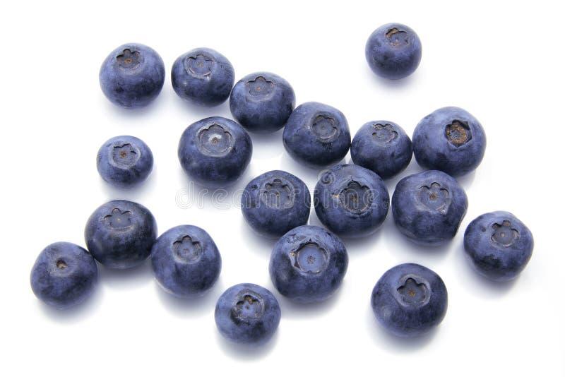 jagody błękitny obraz stock