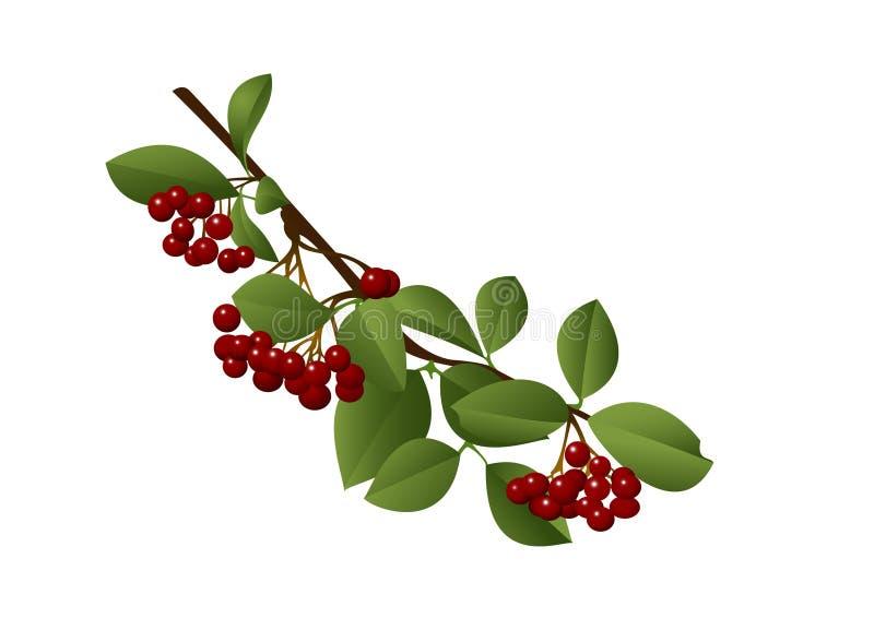 jagody czerwone ilustracja wektor