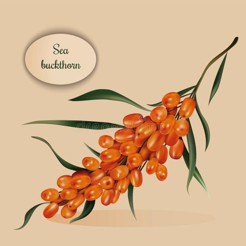 jagody rozgałęziają się buckthorn morze royalty ilustracja