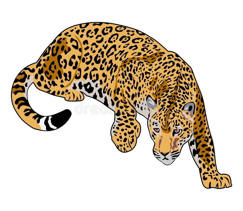 jaguar vektor illustrationer