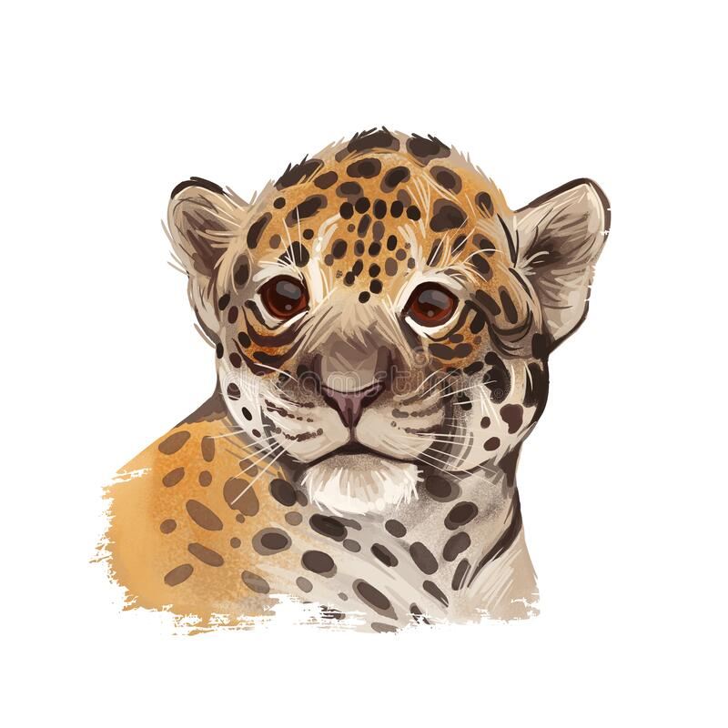 Jaguar baby tabby portrait closeup of animal. Panthera carnivore fauna. Wildlife of South America, drawn big mammal with furry. Coat. Feline cat with snout vector illustration