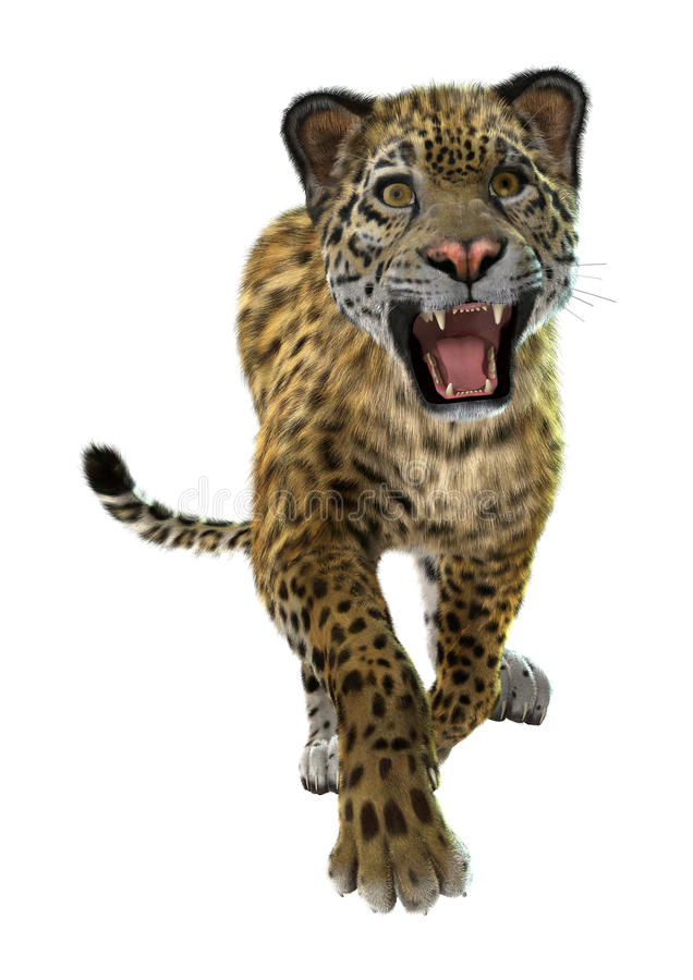 jaguar dziki ilustracja wektor