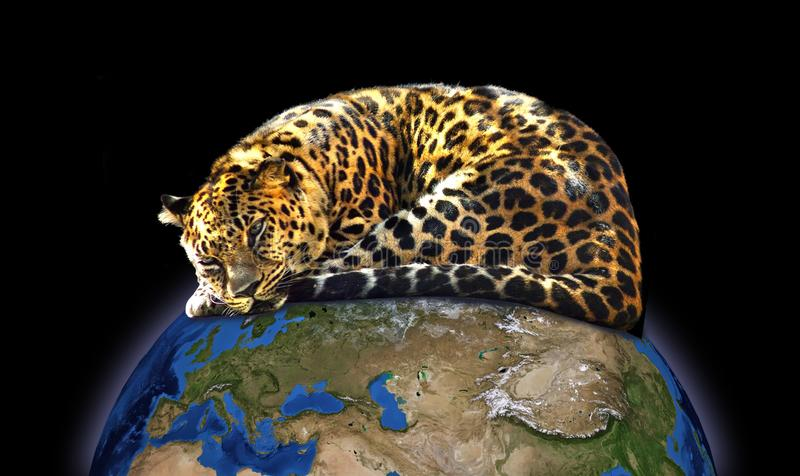 Jaguar on the globe close-up stock photos