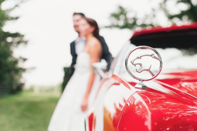 Jaguar-Hochzeit stockfotos