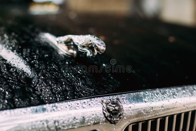 Jaguar Logo Logotype Sign - vintage sauvage J de Cat Jaguar In Jump On photographie stock libre de droits