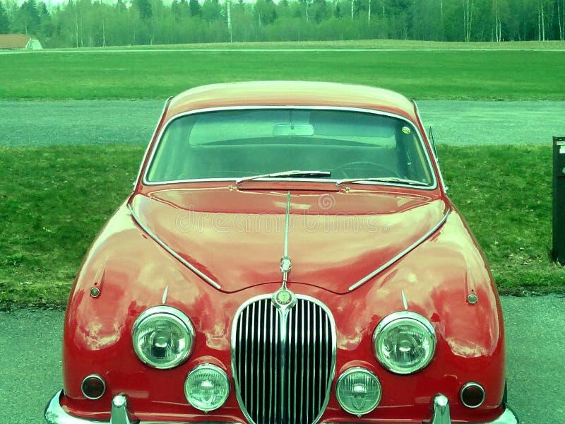 jaguar foto de stock