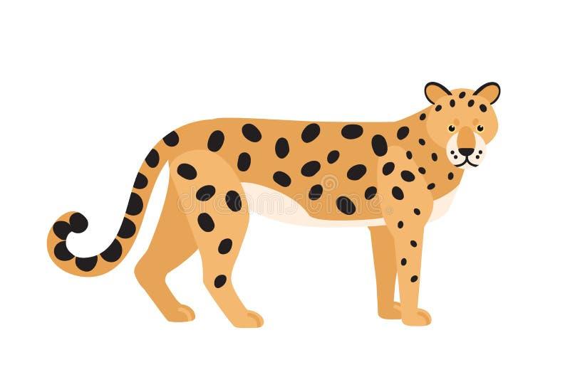 Jaguar odizolowywał na białym tle Oszałamiająco dziki egzotyczny mięsożerny zwierzę Pełen wdzięku śliczny lub ilustracji