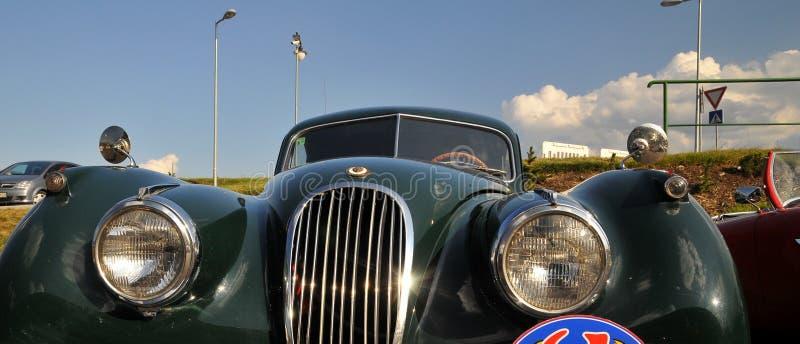 Jaguar unter Himmel lizenzfreie stockbilder
