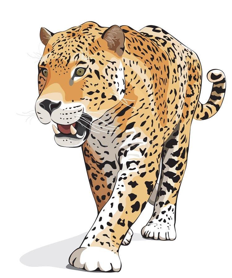 Jaguar - wektor odosobniony, cień ilustracji