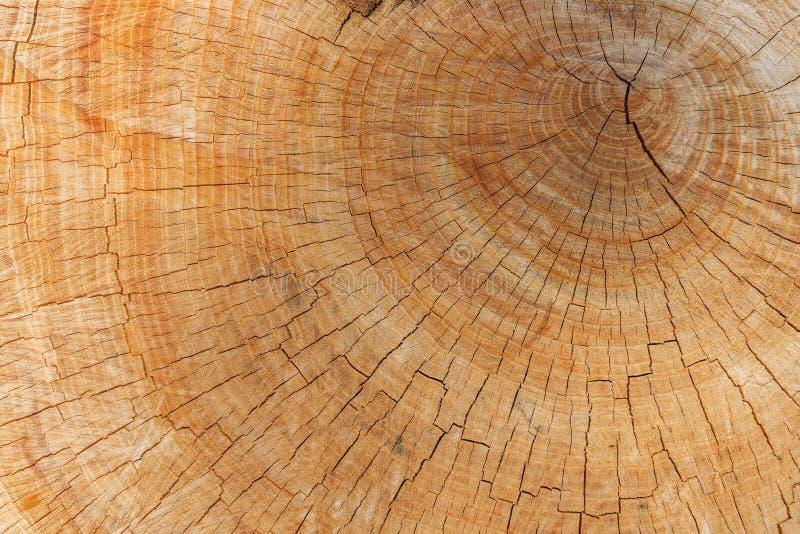Jahresring auf geschnittenem Baum stockfoto