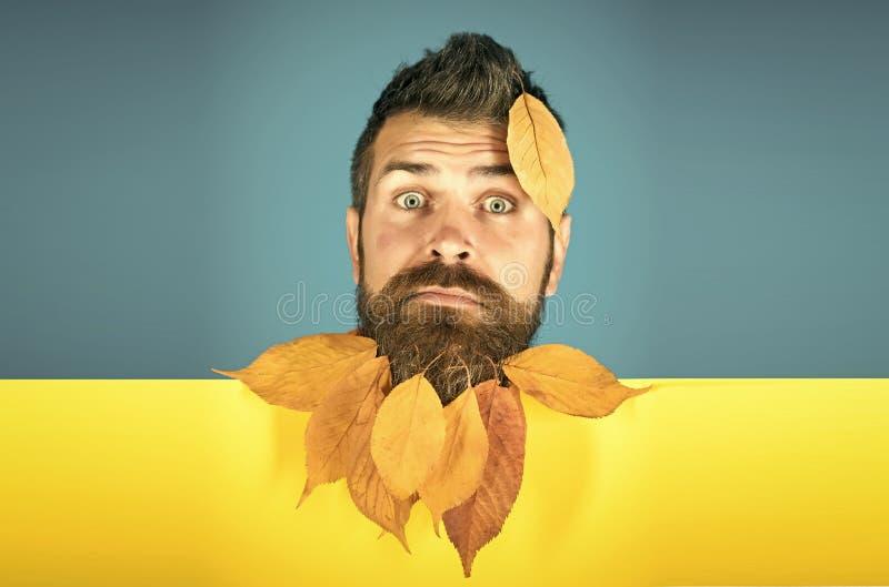 Jahreszeit und Herbst lizenzfreie stockfotografie