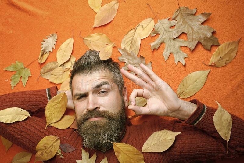 Jahreszeit und Herbst lizenzfreie stockfotos