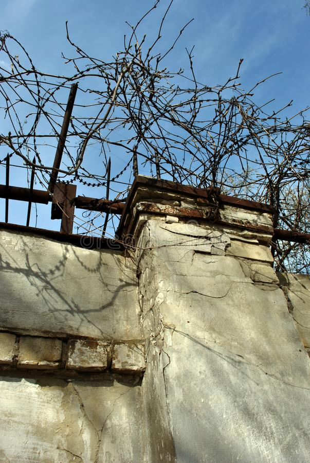 Jail barbed wire with wild grape twigs on it, brown brick fence, spring sunny landscape with blue sky. Vertical background stock photo
