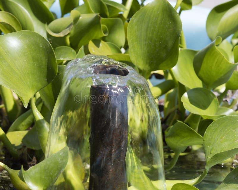 Jaillissement et waterlily feuille de fontaine photographie stock libre de droits