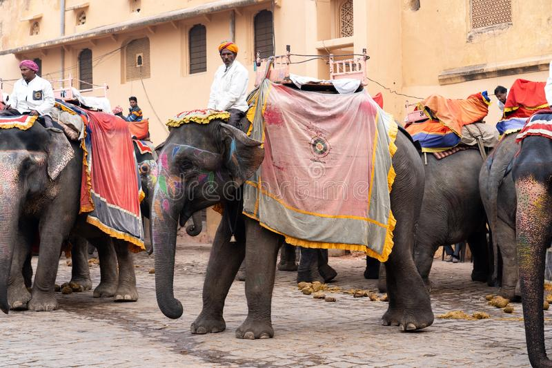 Decorated elephants at Amber Fort in Jaipur, India royalty free stock image