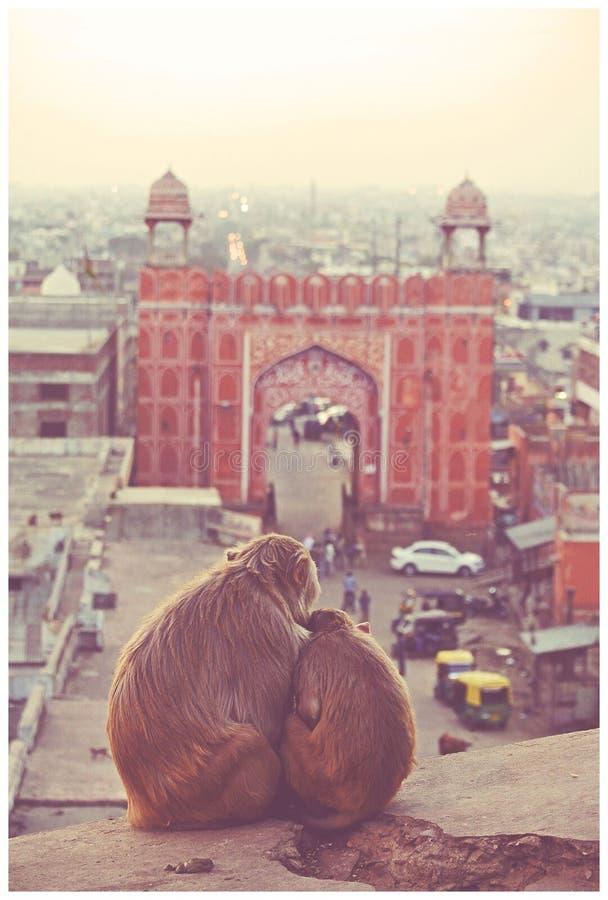 Jaipur-Liebe lizenzfreies stockfoto
