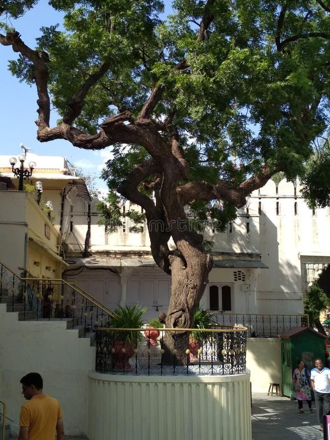 Jaipur market area tree on the platform stock image