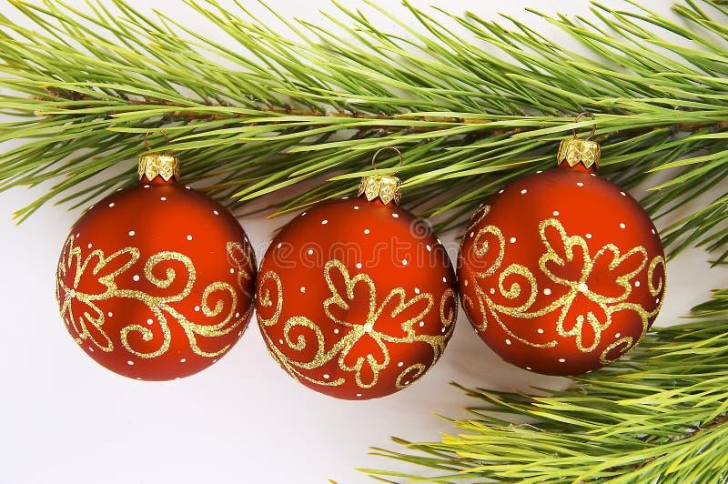 jaja 2 rozgałęziają się czerwony pine obraz royalty free