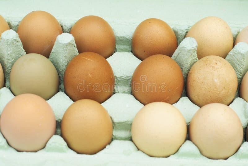 jaja zostaną kurczaków świeżego zakres zdjęcia royalty free