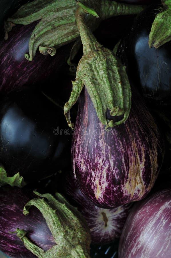 jajeczna aubergines roślina fotografia stock