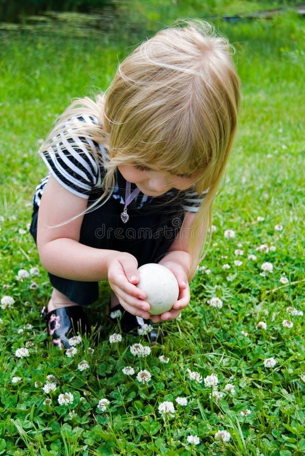 jajeczna gąska zdjęcia stock