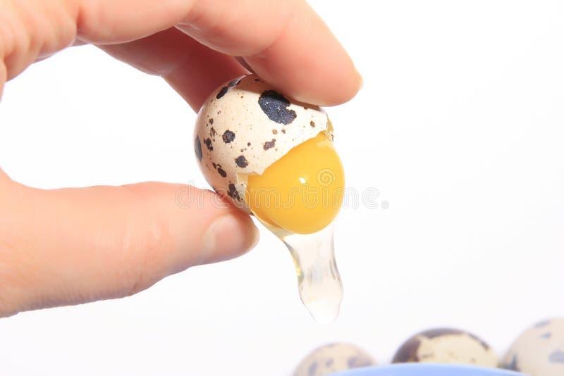 jajeczna przepiórka obraz stock
