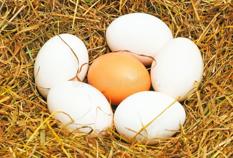 jajeczni jajka pięć jeden biały kolor żółty fotografia royalty free
