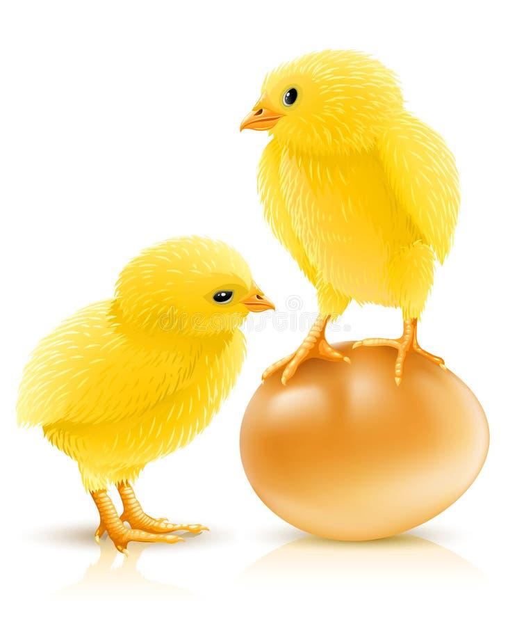 jajeczny kurczaka kolor żółty trochę dwa ilustracji