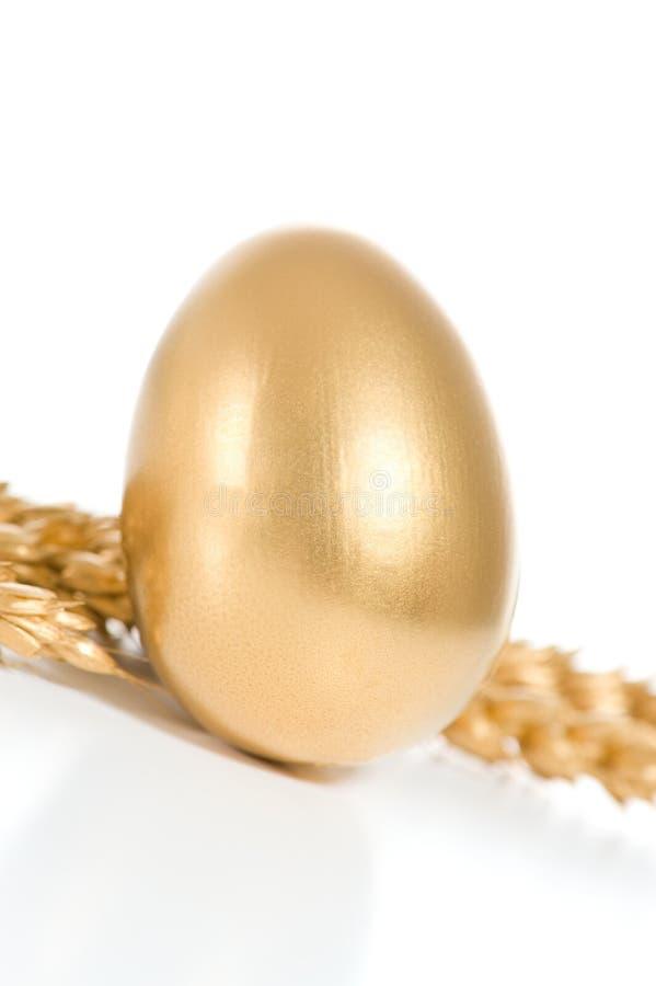 jajeczny złoto zdjęcia royalty free