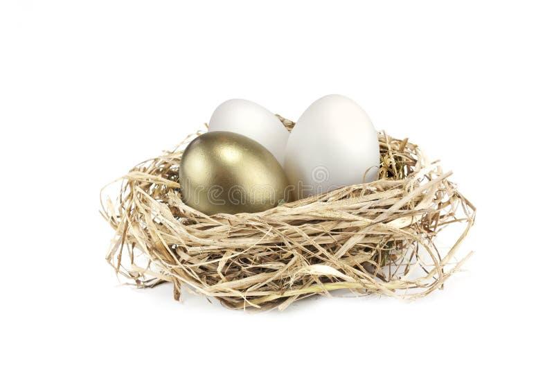 jajeczny złoty gniazdeczko zdjęcia royalty free
