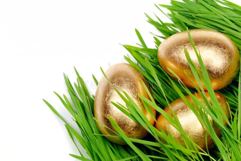jajek złocista kryjówki rośliny banatka obraz stock