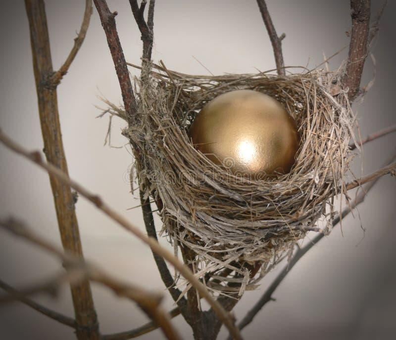 jajka 2 gniazdo zdjęcie royalty free